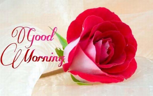 Bông hoa ngọt ngào dành tặng vk mỗi sớm mai