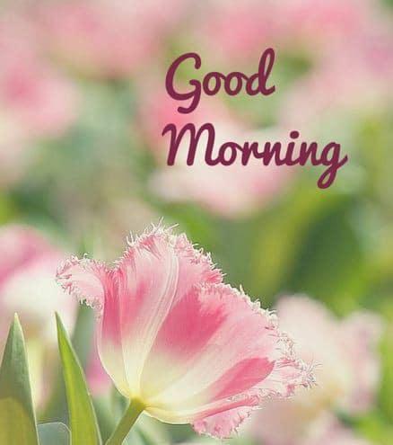 Bông hoa tươi thắm cho ngày mới thêm vui