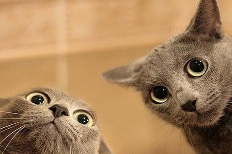 Buổi sáng thêm hài hước và vui vẻ với hình ảnh hai chú mèo
