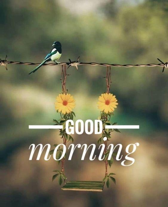 Chúc bạn một ngày mới thật vui vẻ, tươi tắn