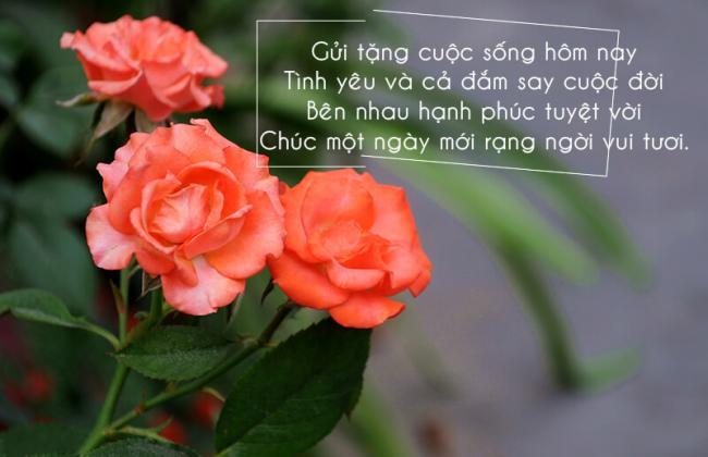Đóa hoa tươi xinh cùng lời chúc hay cho một buổi sáng ý nghĩa