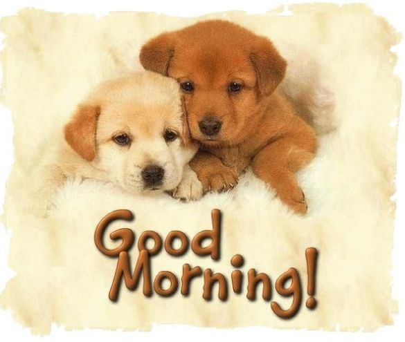 Hai chú chó siêu cute đang chào ngày mới