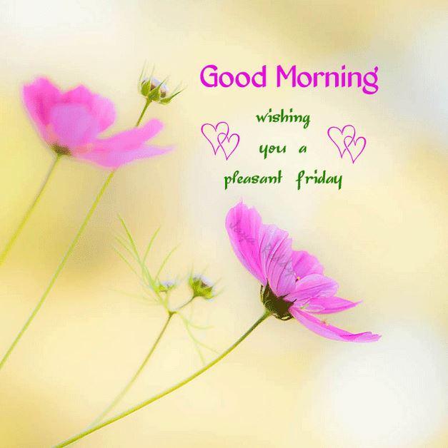 Hình ảnh hoa dễ thương đón chào ngày mới gửi cho người yêu