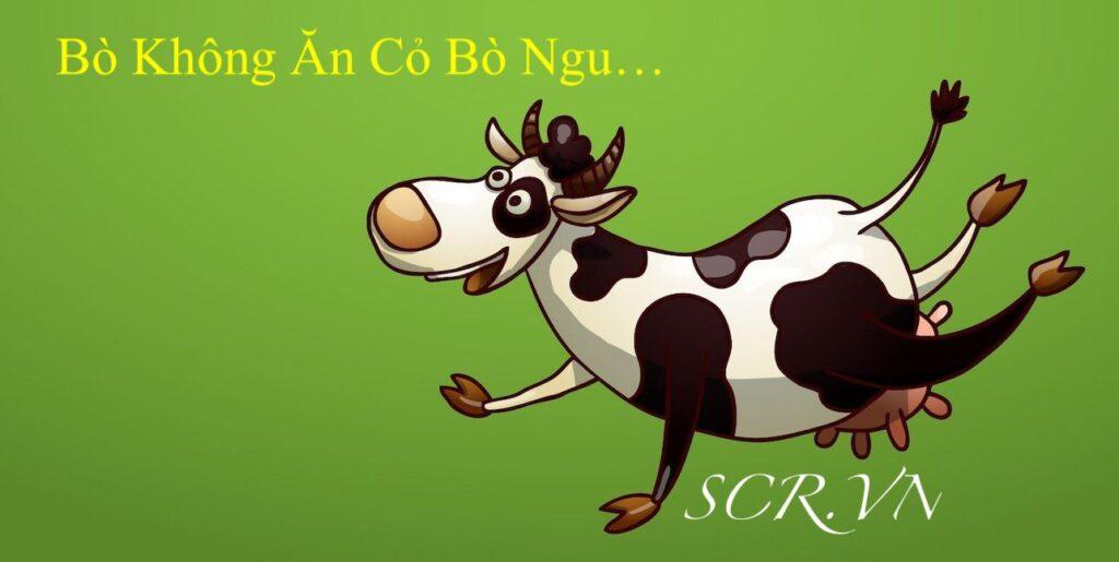 Bò không ăn cỏ bò ngu
