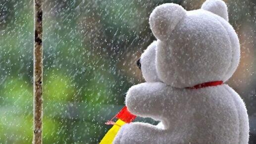 Hình ảnh chú gấu cô đơn lặng ngắm mua rouw trong ngày lễ tình nhân