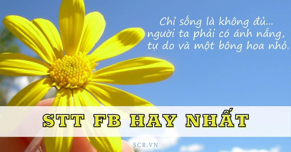 STT FB HAY NHẤT