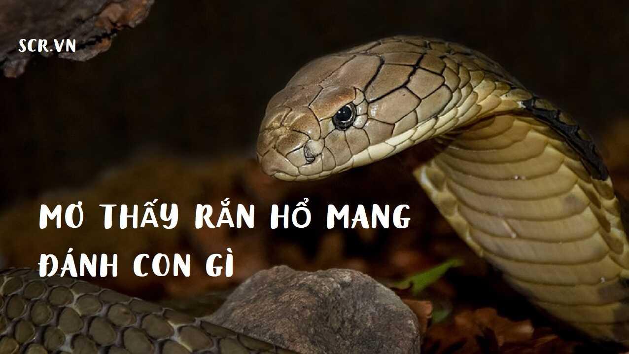 mơ thấy rắn hổ mang đánh con gì