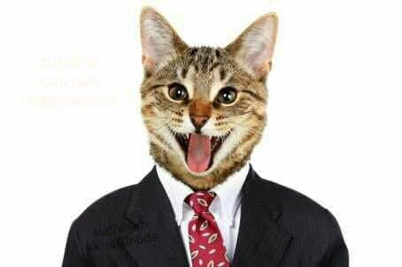 Ảnh chú mèo mặc vest